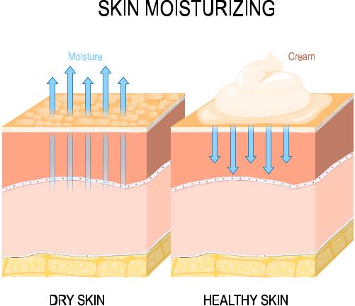 皮革の保湿